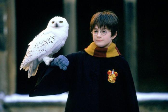Il giovane mago Harry Potter con la sua civetta Edvige