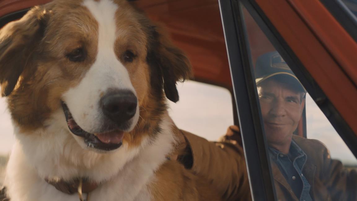 Qua la Zampa 2, trailer e trama del film con Dennis Quaid