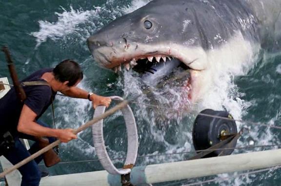 Scena tratta da Lo squalo