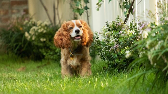 La cagnolina che interpreta Lilli