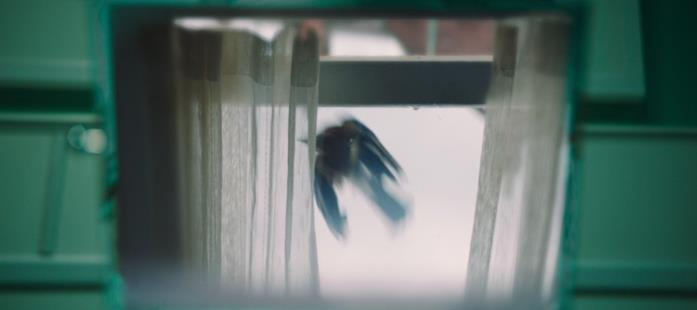 Un uccello sbatte contro il vetro della finestra, riflessa sullo specchietto d'ospedale