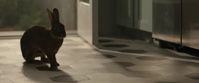 Una lepre osserva Crystal dall'ingresso della cucina