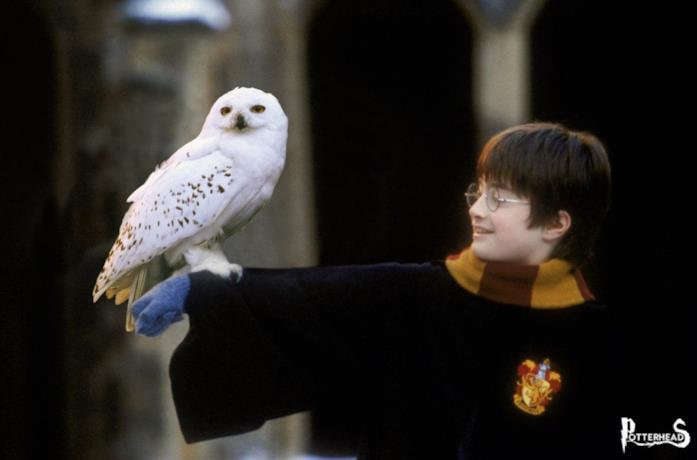 Harry Potter, undicenne, tiene su un braccio la civetta bianca Edvige