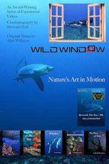 Poster Wild Window