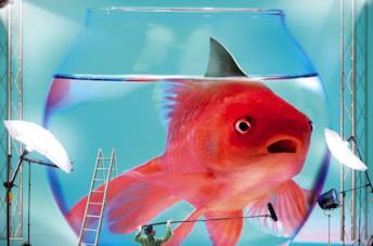 Il pesciolino rosso simbolo di Boris