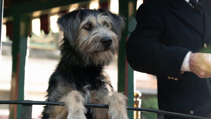 Il cane protagonista di Lilli e il Vagabondo
