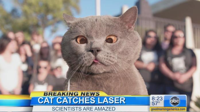 Primo piano del gatto protagonista del video The Cat Who Caught the Laser