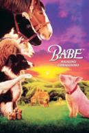 Poster Babe - Maialino coraggioso