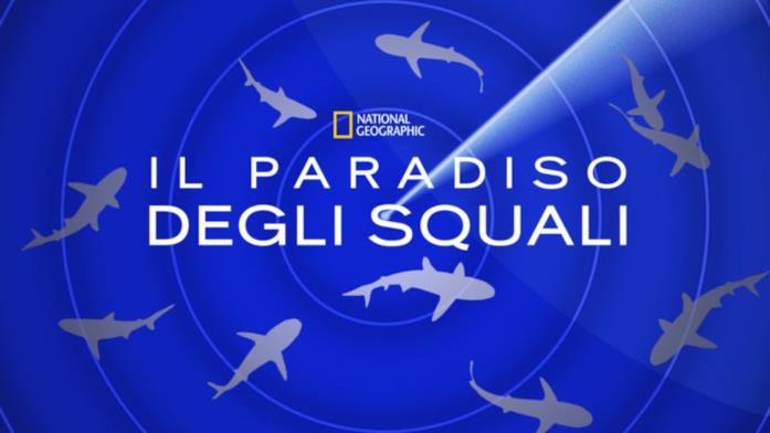 Il paradiso degli squali
