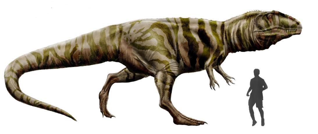 Possibile aspetto del Giganotosaurus
