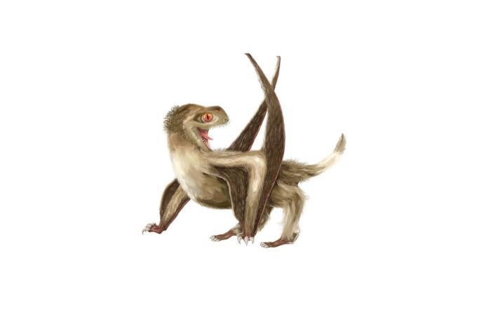 Rappresentazione di uno pterosauro dalla coda corta