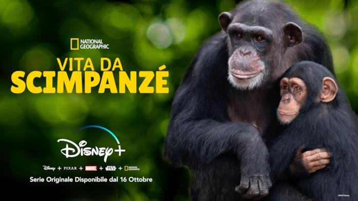 Due scimpanzé si abbracciano all'interno della riserva naturale