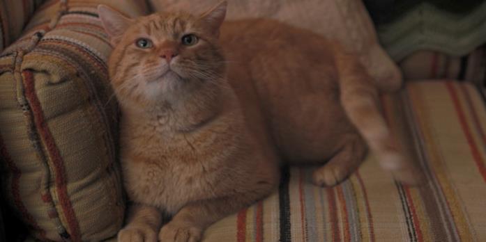 Mews, il gatto degli Henderson in Stranger Things