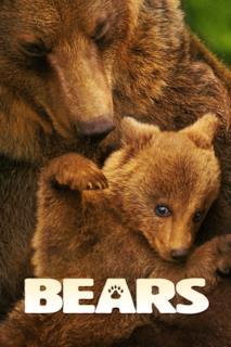 Poster Bears