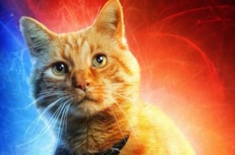 Il gatto Goose protagonista del film Captain Marvel
