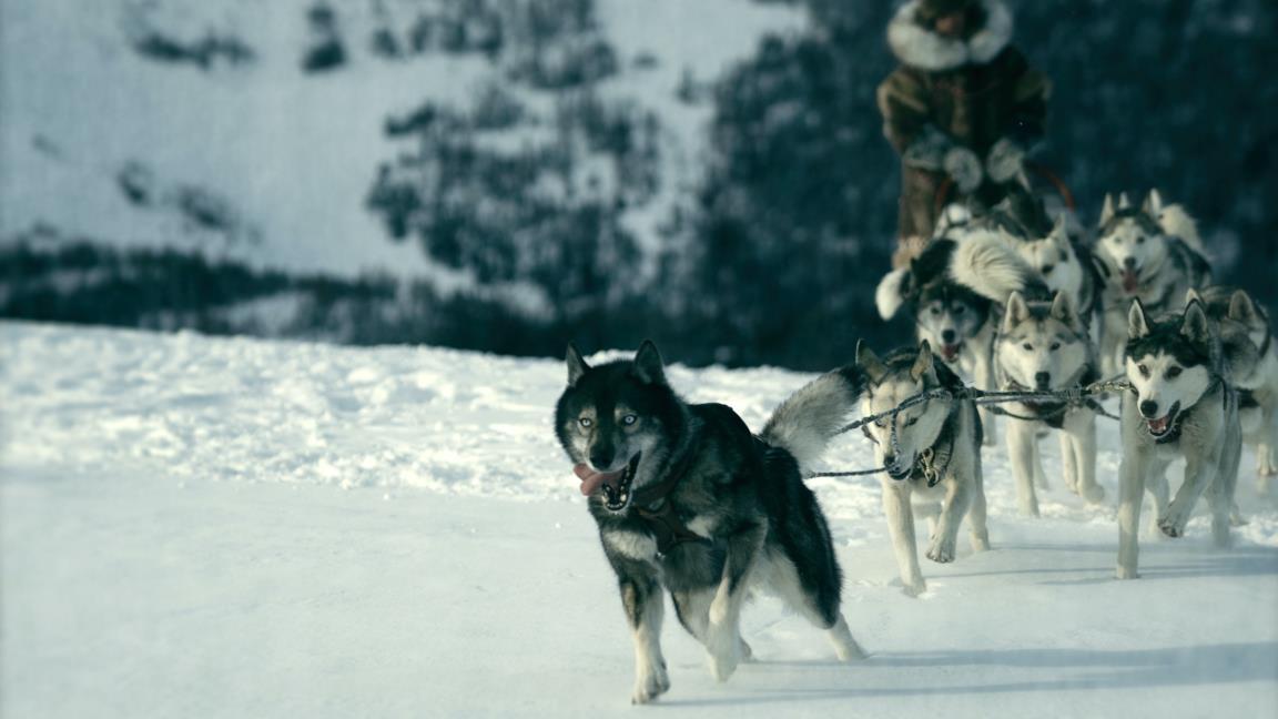 Il cane Togo nell'omonimo film di Disney+