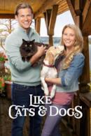 Poster Amarsi come cani e gatti