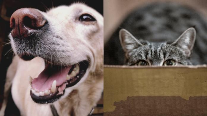 Primo piano di un cane e di un gatto