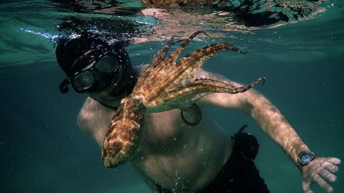 Un'immagine da Il mio amico in fondo al mare