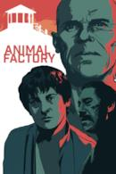 Poster Animal Factory