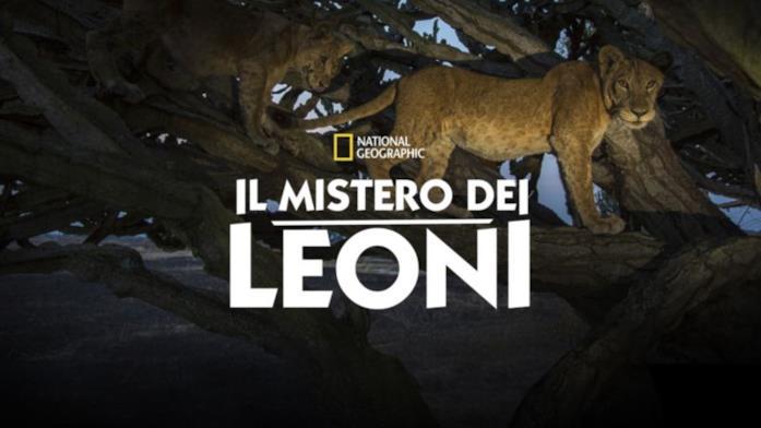 Il mistero dei leoni