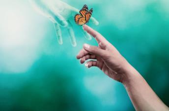 Una mano umana sfiora una farfalla