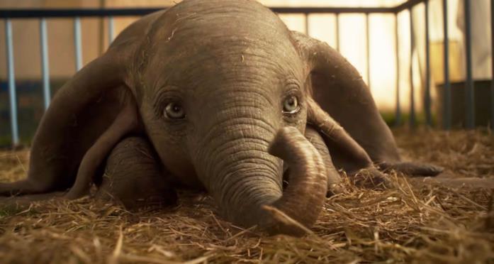 Dumbo nel remake 2019