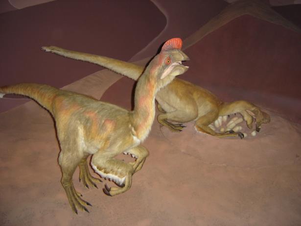 Due Oviraptor, ricostruiti secondo le informazioni oggi disponibili