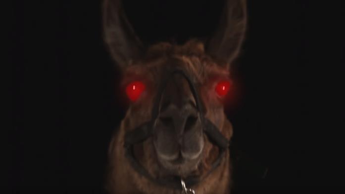 Louis il lama, protagonista dell'horror intitolato Llamageddon.