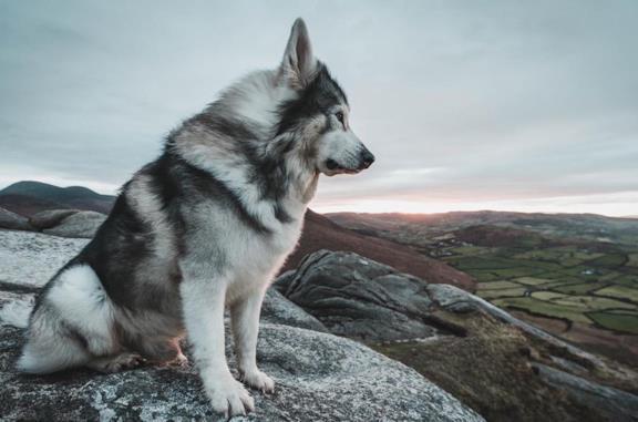 Un'immagine del cane Odin