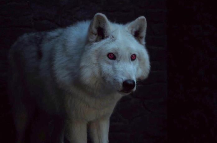 Ghost, il metalupo di Jon Snow in Game of Thrones