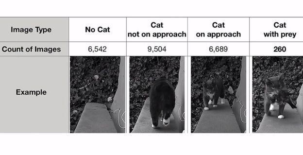 Varie immagini del database della porta per gatti automatica rileva prede
