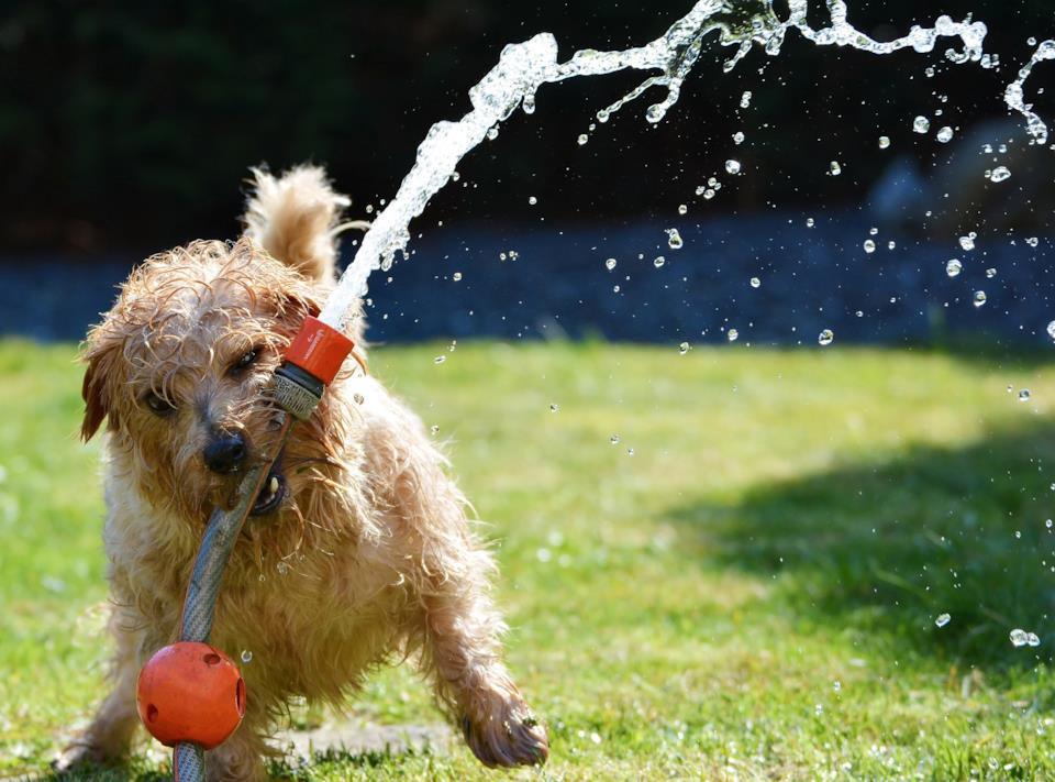 Igiene delle migliori ciotole per cani