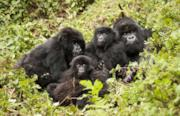 Tour di birdwatching e safari tra i gorilla in Rwanda