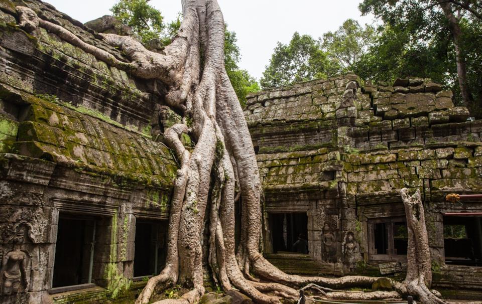 Tempio Ta Prohm in Cambogia