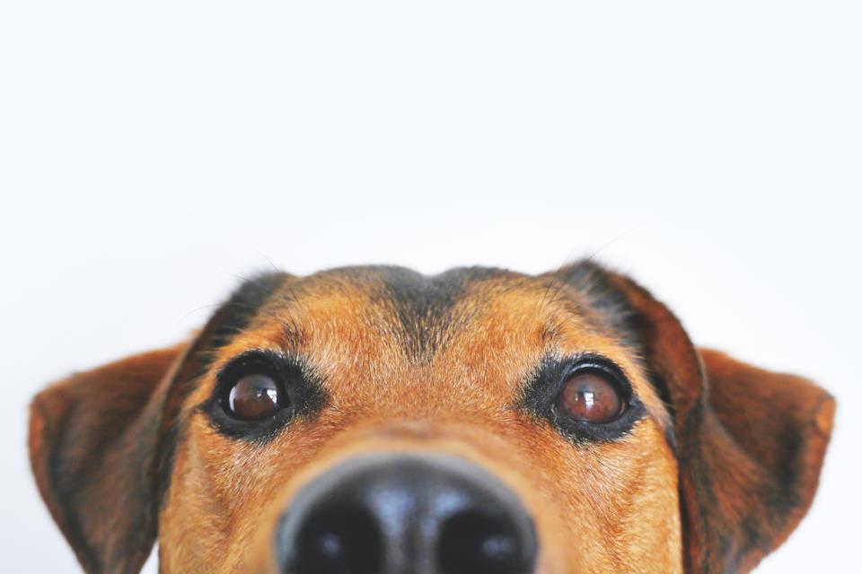 Cani voraci le cinque migliori ciotole