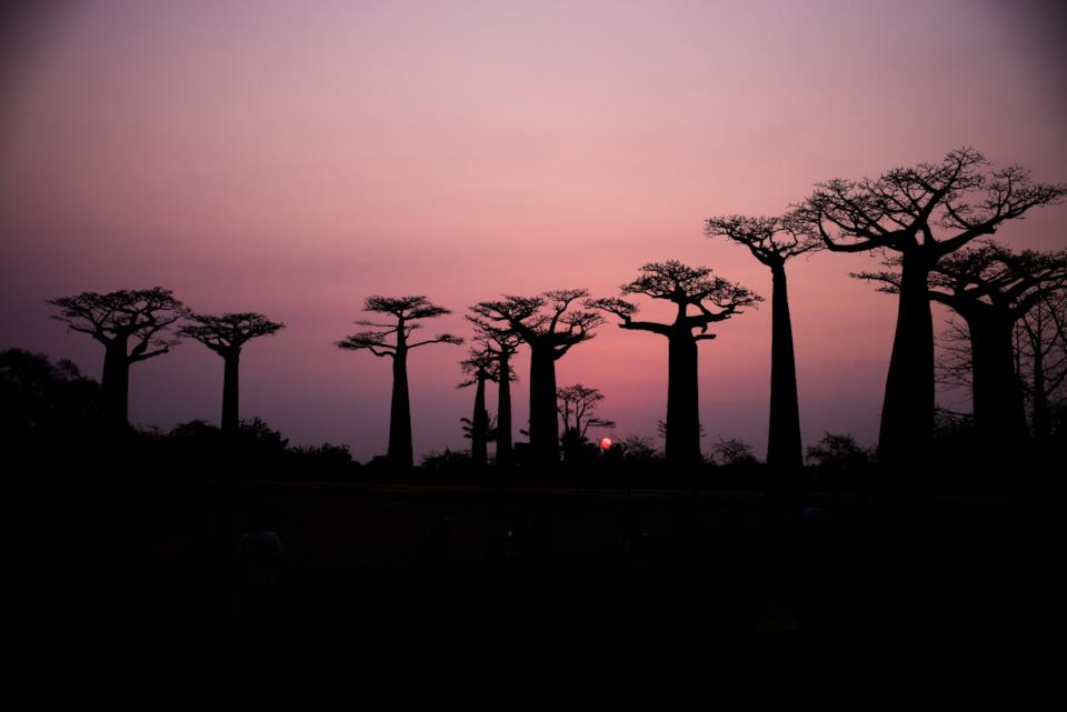 Cosa vedere in Madagascar: Baobab Avenue