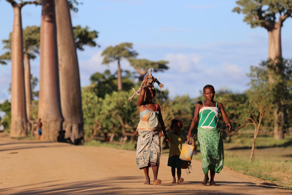 Abitanti del Madagascar in Baobab Avenue