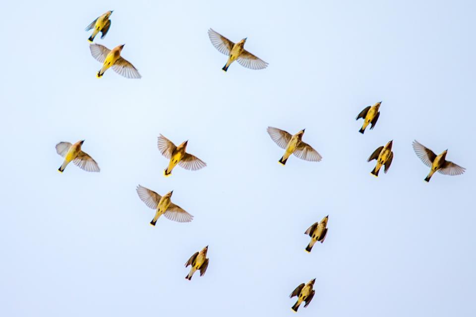 Migliori binocoli per birdwatching