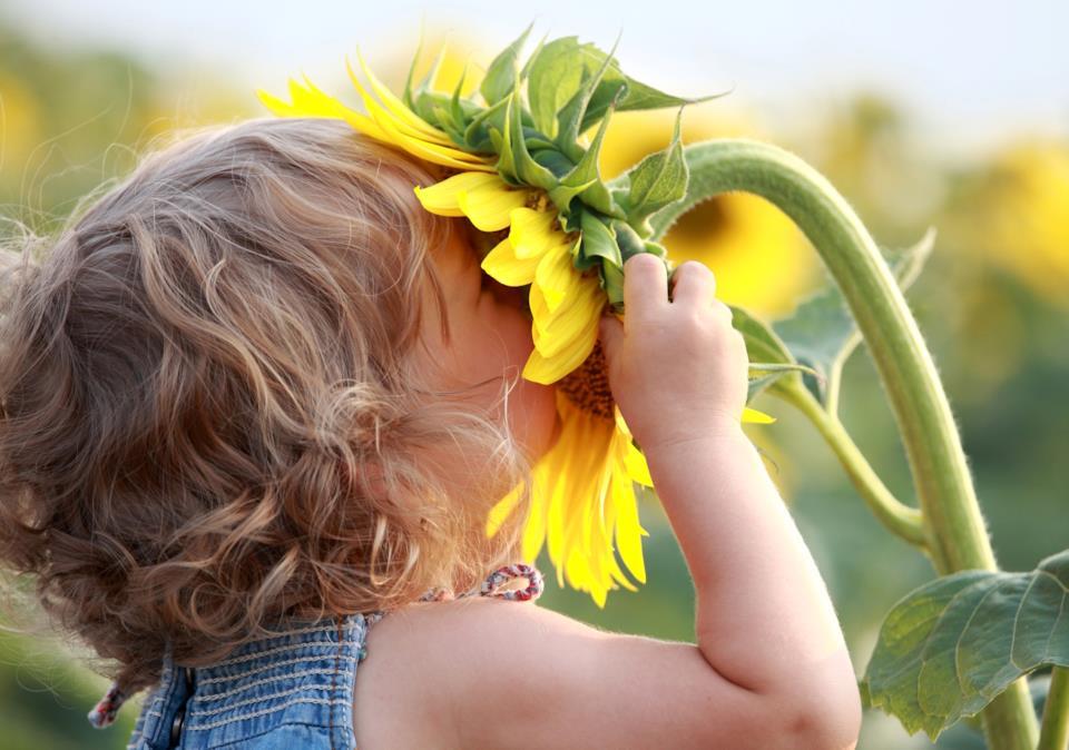 Bambino e girasole: le allergie alle creme solari per bambini