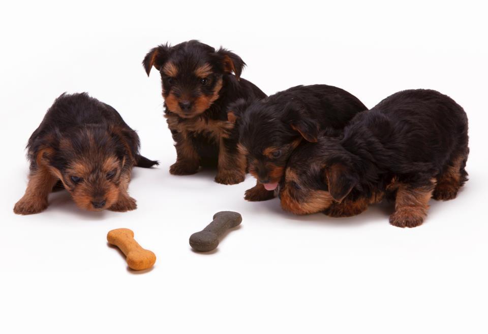 Numero di pasti adatti al cane