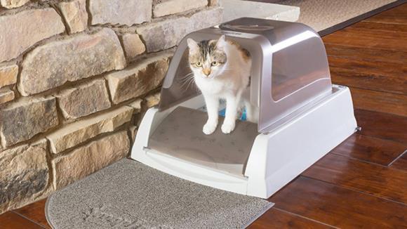 Migliori lettiere per gatti