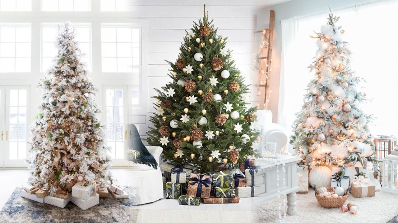 Una guida per scoprire quali sono i migliori alberi di Natale.