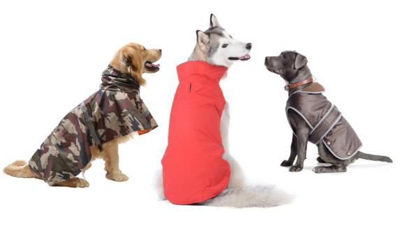 La TOP10 dei cappotti anti pioggia per cani