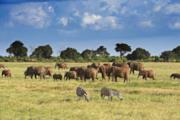 Camping safari dal Kenya allo Zambia attraverso 4 stati
