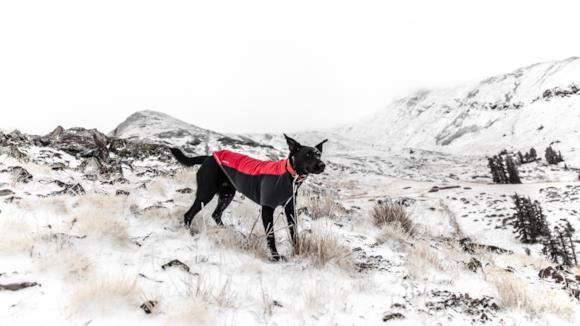 Cappotto invernale per cane di grande taglia
