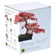 Plant Theatre - Bonsai Trio