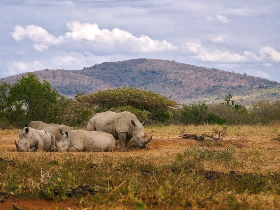 Safari in Sudafrica