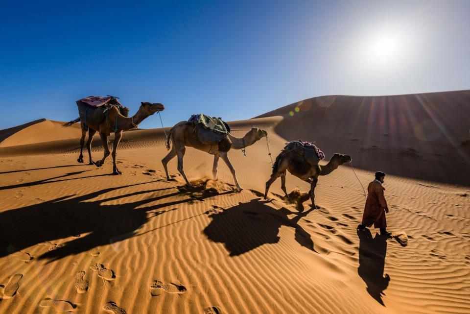 Cammelli nel deserto del Sahara in Marocco