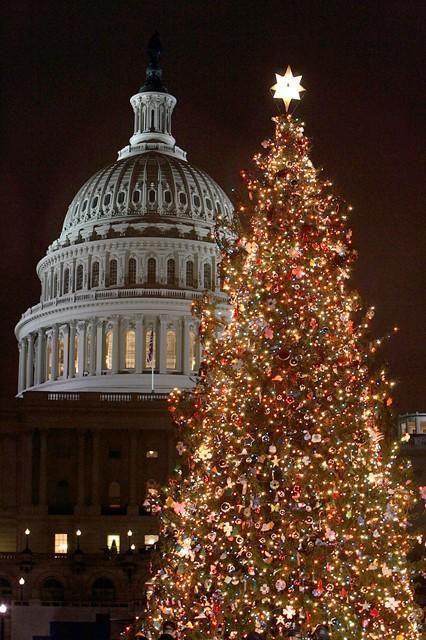 Albero natalizio di Washington negli USA